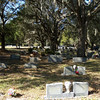 6. Maxine is buried at Evergreen Cemetery in Jacksonville, near where Maxine lived years ago. It's a beautiful cemetery, filled with huge live oak trees and Spanish moss.