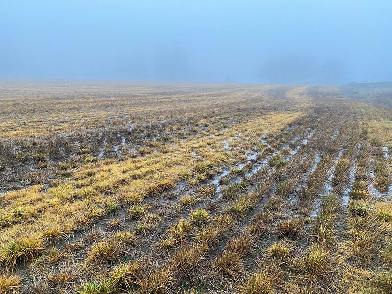Grass Seed field in Winter