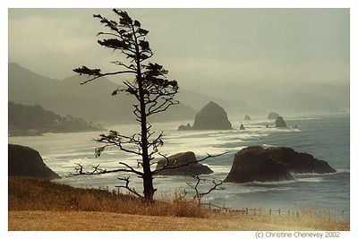 Ecola Pt , overooking Cannon Beach