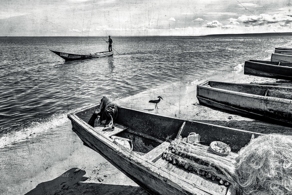 Boatman and hammerkop