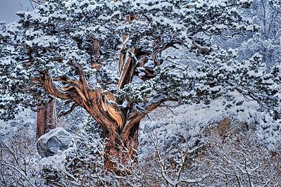 Early season snow and tree