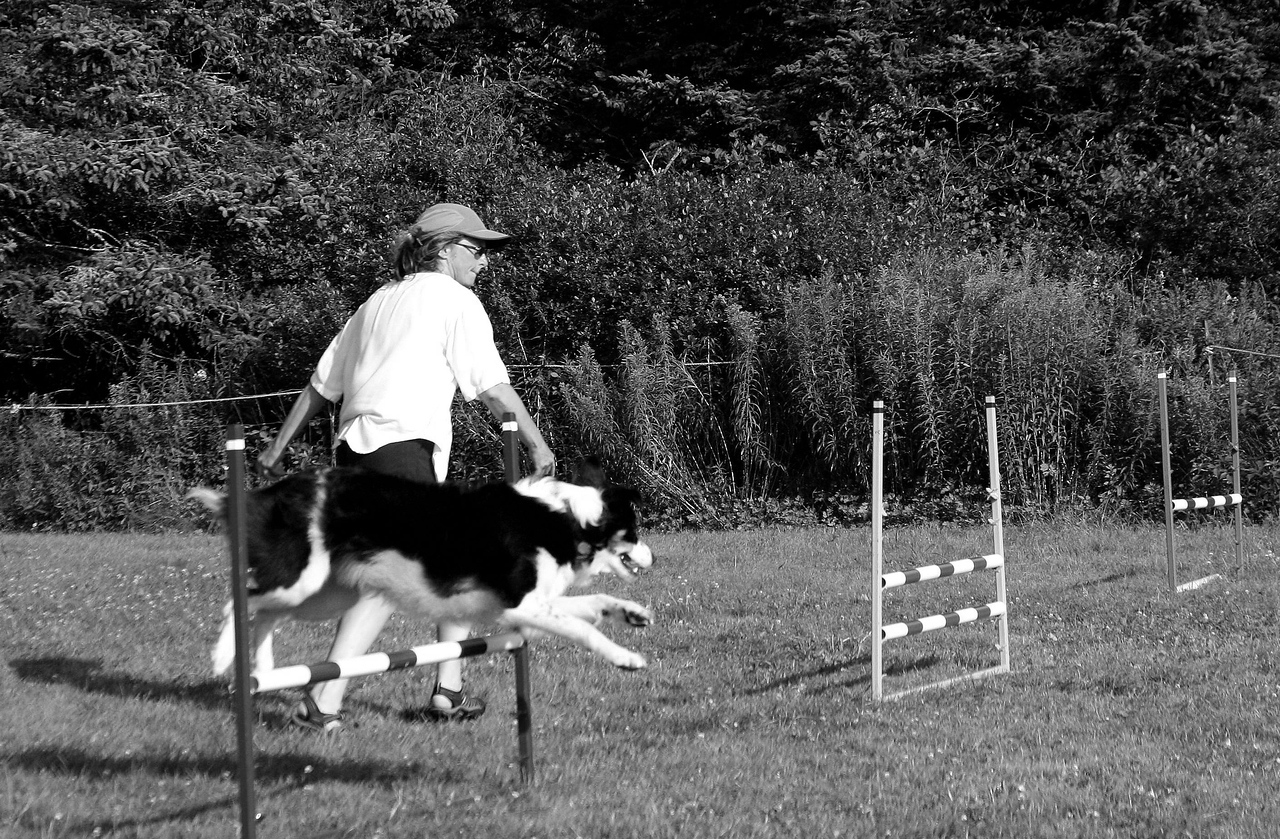 """Using a workshop format, training is focused on foundation skills for family obedience or canine sports, as well as advanced instruction in agility. The """"Flying High"""" mini-workshops (monthly), """"Skills to Soar By"""" annual event workshop (August) with guest instructor; and """"Supersonic Fun Days"""" (bringing-it-together style workshops), are a few examples. Specialized clinics, such as those for contacts and weaves, are also offered. Private consults typically to develop personalized """"Courses of Action"""", which enable achievement of individual goals (e.g. recreation, competition, fun, burning off energy), are available. Video analysis is often used to zero in on specific problems or """"holes in the training""""."""