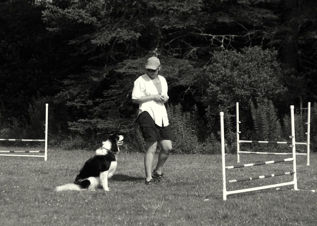 <h2>Vision Statement </h2>  <h3>Flying Tails will strive to provide a fun, positive learning experience for the dog and owner, using innovative dog training and relationship building techniques in a fresh, relaxed environment.</h3>