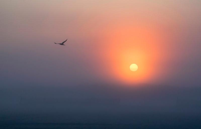 Sunrise Skimmer