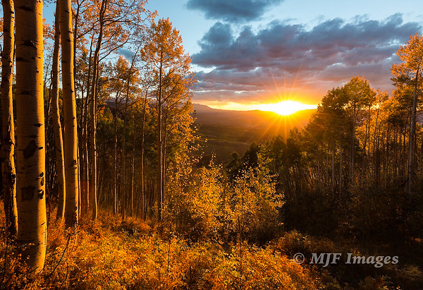 Sunset in the Aspen Grove