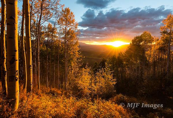 Sunset in the Aspen Grove