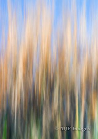 Reeds Reaching