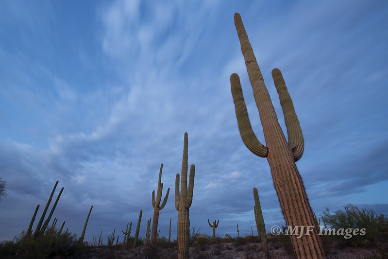 Arizona_Summer_2015_092