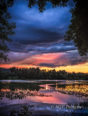 Willamette River Wetlands