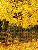 Many Autumns