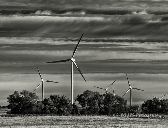 Wind in Black and White