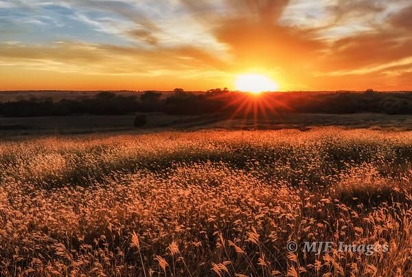 Tallgrass Sunset