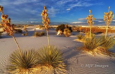 New_Mexico_2015_154