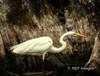 Stalking the Cypress Swamp