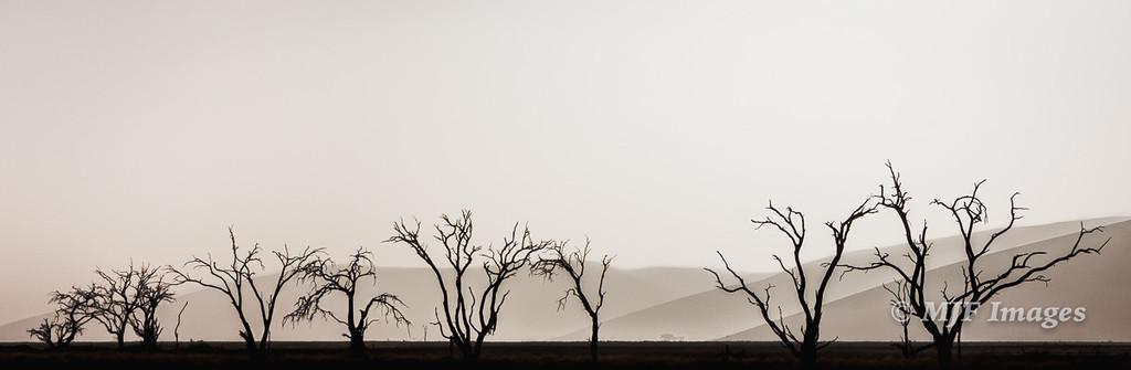 Dead Trees