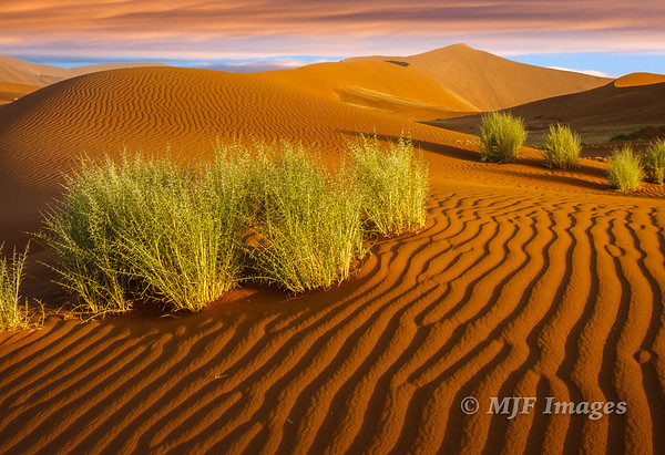 Sands of the Namib