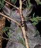 Bush Baby Feeding