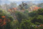 Tikal in the Mist