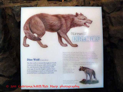 Columbia Gorge Discovery Center, The Dalles, OR For the Game of Thrones fans.... Dire Wolves are real.