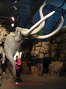 Columbia Gorge Discovery Center, The Dalles, OR R near a model of a mammoth