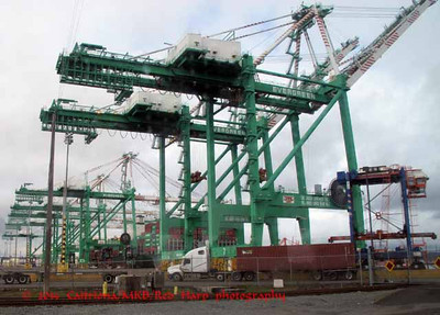 The cranes of the Evergreen company, to which the Port leases land for operation.