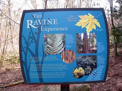 The Ravine Experience