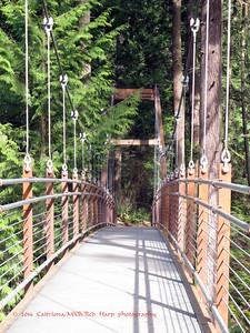 The suspension bridge