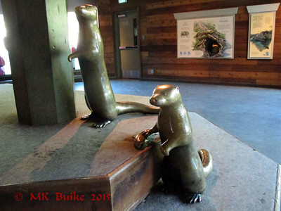 River Otter sculpture (didn't see a sign but might also be the work of Tony Angell)