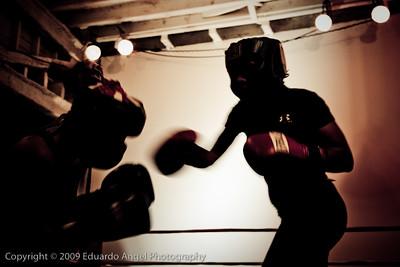 Boxer-5