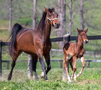 ML Cupcake and Colt
