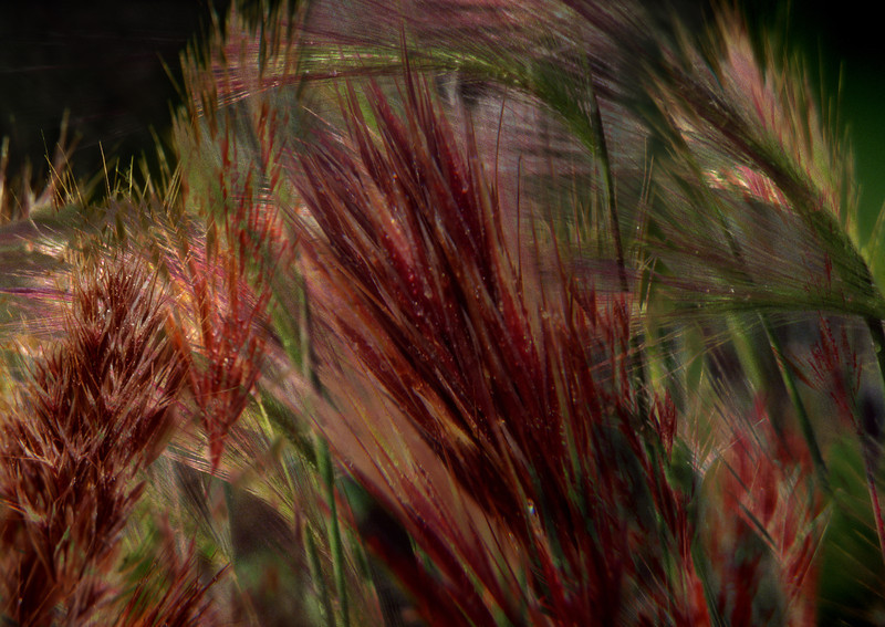 Weeds II, 2011<br /> Photographic Digital Collage