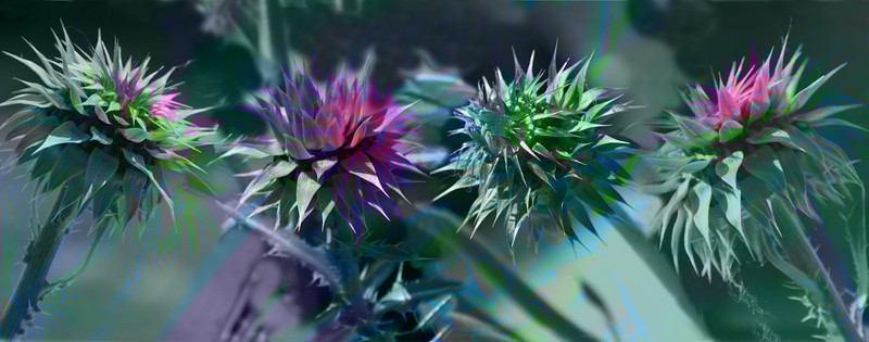 Thistle Color II, 2010<br /> Photographic Digital Collage