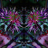 Thistle Reflection, 2010<br /> Photographic Digital Collage