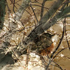 Red Breasted Robin, 2011<br /> Photographic Digital Collage