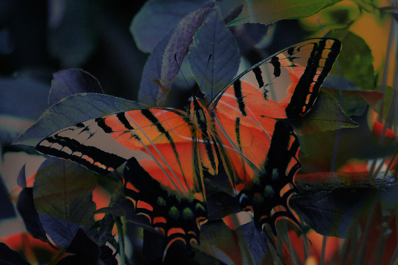 Butterfly 2, 2011<br /> Photographic Digital Collage
