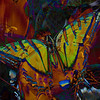 Butterfly 3, 2011<br /> Photographic Digital Collage