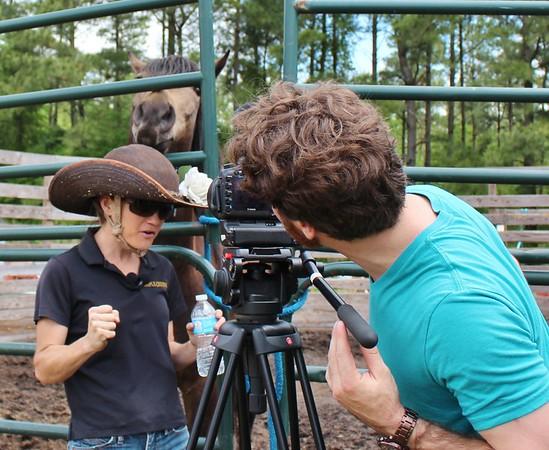 Mustang Photobomb - Nat Geo Wild Filming
