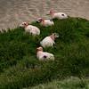 5 sheep!!