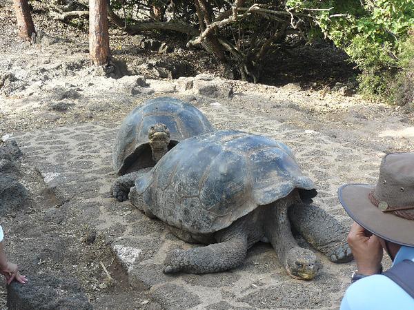 Galapagos #2