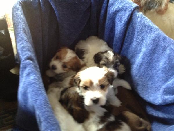 2-3-13 ccc puppy 3