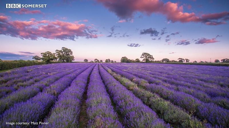 7-15-16 Somerset Lavender Field