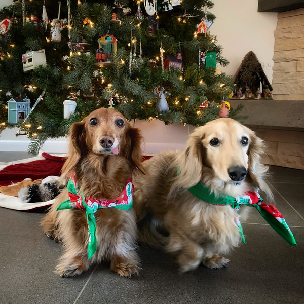 12-14-18 doggies