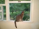 kitty 9-07