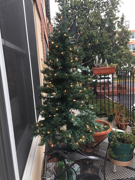 12-16-16 balcony tree