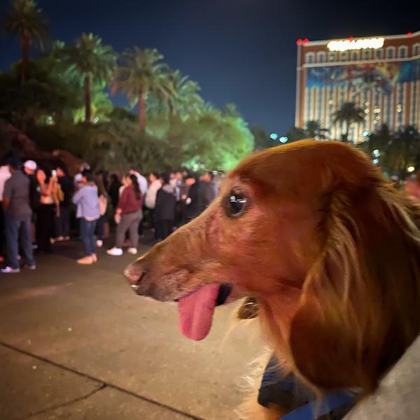 11-13-19 Vegas 4