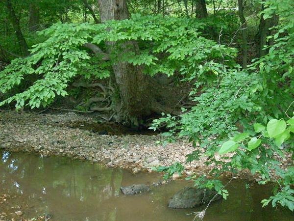 6-6-12 Sligo Creek 005