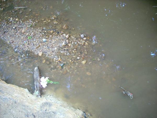 6-6-12 Sligo Creek 003