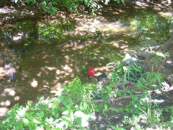 6-6-14 Sligo Creek 004