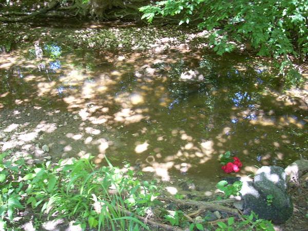 6-6-14 Sligo Creek 006