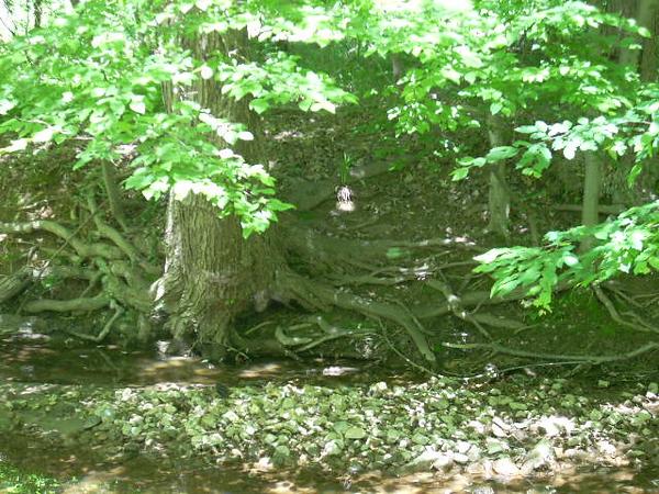 6-6-14 Sligo Creek 001